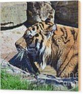 Tiger Playing  Wood Print