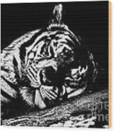 Tiger R And R Black And White Wood Print