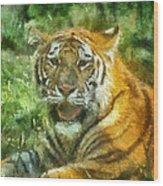 Tiger Resting Photo Art 05 Wood Print