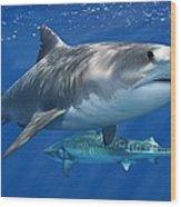 Tiger Shark Wood Print