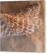 Tiger Shell Wood Print