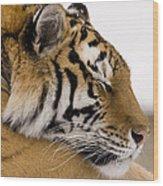 Tiger Sleeping Wood Print
