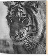 Tiger Stare In Black And White Wood Print