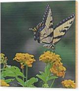 Tiger Swallowtail And Lantana Wood Print