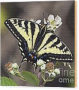 Tiger Swallowtail Butterfly 2a Wood Print