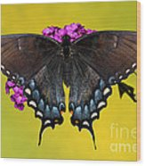 Tiger Swallowtail Butterfly, Dark Phase Wood Print
