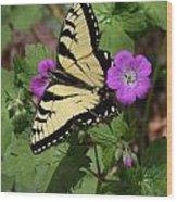 Tiger Swallowtail Butterfly On Geranium Wood Print