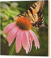Tiger Swallowtail Feeding Wood Print