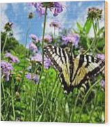 Tiger Swallowtail On Pincushion Flowers Wood Print