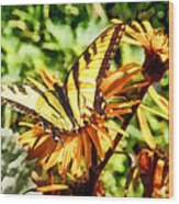 Tiger Swallowtail On Yellow Wildflower Wood Print