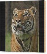 Tiger Symbol Of Wood Print