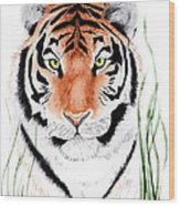 Tiger Tiger Where Wood Print