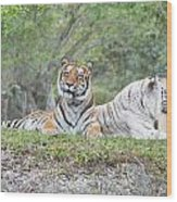 Tiger Time Wood Print