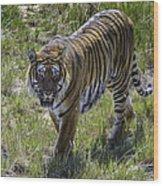 Tiger Wood Print by Tom Wilbert