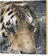 Tiger Water Wood Print