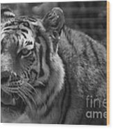 Tiger With A Hard Stare Wood Print