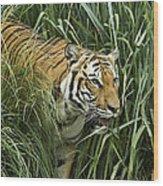 Tiger4 Wood Print