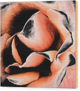 Tigers And Roses Wood Print