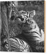 Tigers Kissing Wood Print