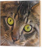 Tigger's Stare Wood Print