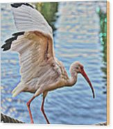 Tightrope Walking Ibis Wood Print