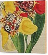 Tigridia Pavonia And Conchiflora Wood Print