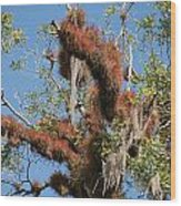 Tikal Furry Tree Closeup Wood Print