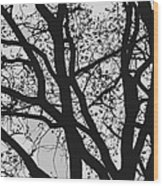 Tilia Night Silhouette Wood Print