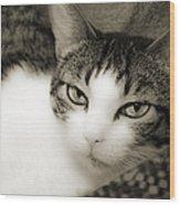 Tilly Little Miss Attitude Wood Print