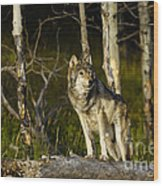 Timber Ghost Wolf Wood Print