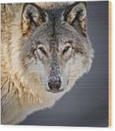 Timber Wolf Christmas Card French 21 Wood Print