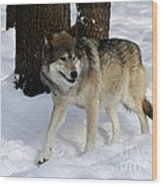 Timber Wolf In A Winter Snow Storm Wood Print