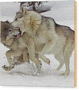 Timber Wolf  Pair Montana Wood Print