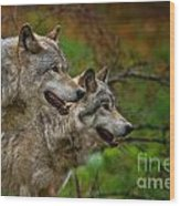 Timber Wolf Pictures 1710 Wood Print