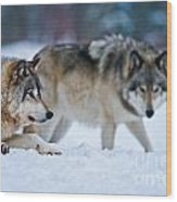 Timber Wolf Pictures 190 Wood Print