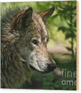 Timber Wolf Pictures 263 Wood Print