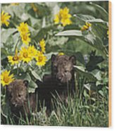 Timber Wolf Pups And Flowers North Wood Print