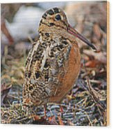 Timberdoodle The American Woodcock Wood Print