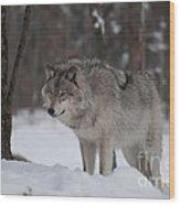 Timberwolf Series 4 Wood Print