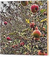 Time To Pick The Apples Wood Print