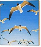Timeless Seagulls Wood Print