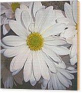 Timeless Sunshine Daisy Wood Print