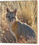 Fox Timmy At Sunset Wood Print