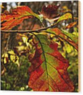Tinged In Red Wood Print