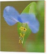 Tiny Blue Flower Wood Print