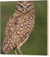 Tiny Burrowing Owl Wood Print
