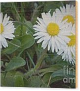 Tiny Daisies Wood Print