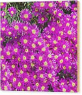 Tiny Dancer - Colorful Midday Flowers Lampranthus Amoenus Flower In Bloom In Spring. Wood Print