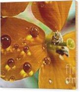 Tiny Dew Drop On Wild Flower Macro Wood Print