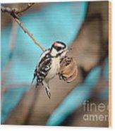 Tiny Downy On Hickory Nut Wood Print